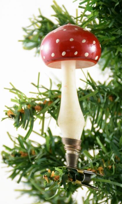 Mushroom k. vp 5