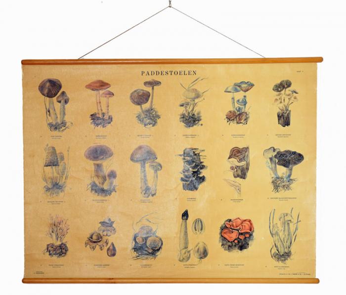 Dutch school chart paddestoelen - mushrooms nr. 5