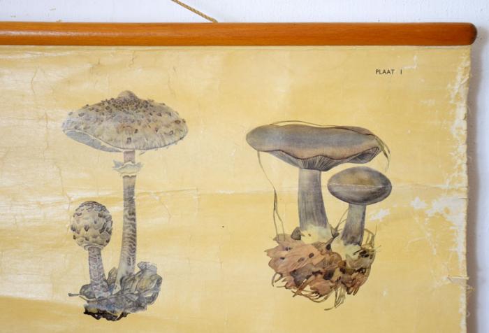 Pull down school chart Mushrooms nr. 5