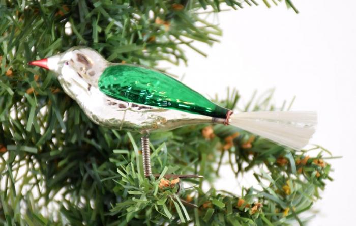 Bird k. f 6
