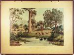 Schoolplaat Australische Planten en Dieren nr. 16