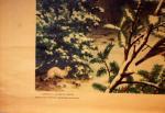 fSchoolplaat vogels in de winter nr. 19