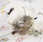 Bird on nest k. z 19